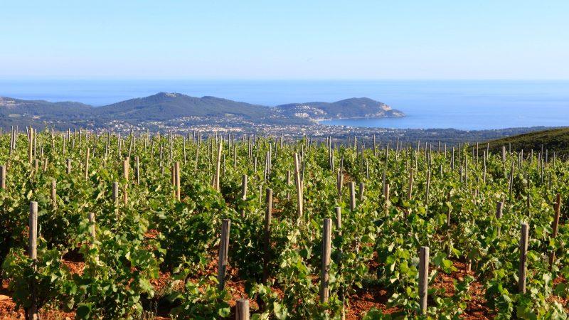 Domaine de la Bégude - Provence